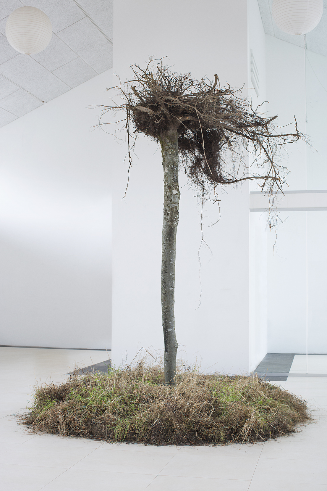 VÆKST (Growth), reverse tree with reddening, turf, 2 x 2 x 3,5 m, 2018