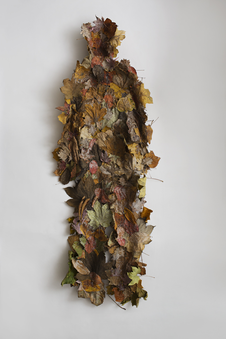 HAM, (Means Him aswell as a shell for a snake or animal that change skin.) Imprint of human body in faded leaves, 180 x 60 c 25 cm, 2018