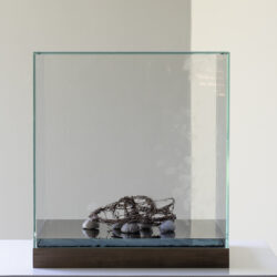 Relikvie (Relic), display case, fingerprints, withered bridal crown, seven fossilised sea urchins, 39,5 x 39,5 x 43,5 cm